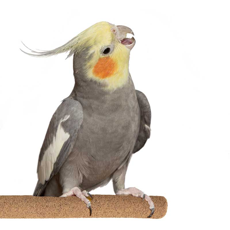 Sure-Grip Grooming Perch Med